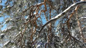 Древесные узоры