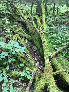 Рузский лес