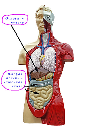 Anatomy of human body