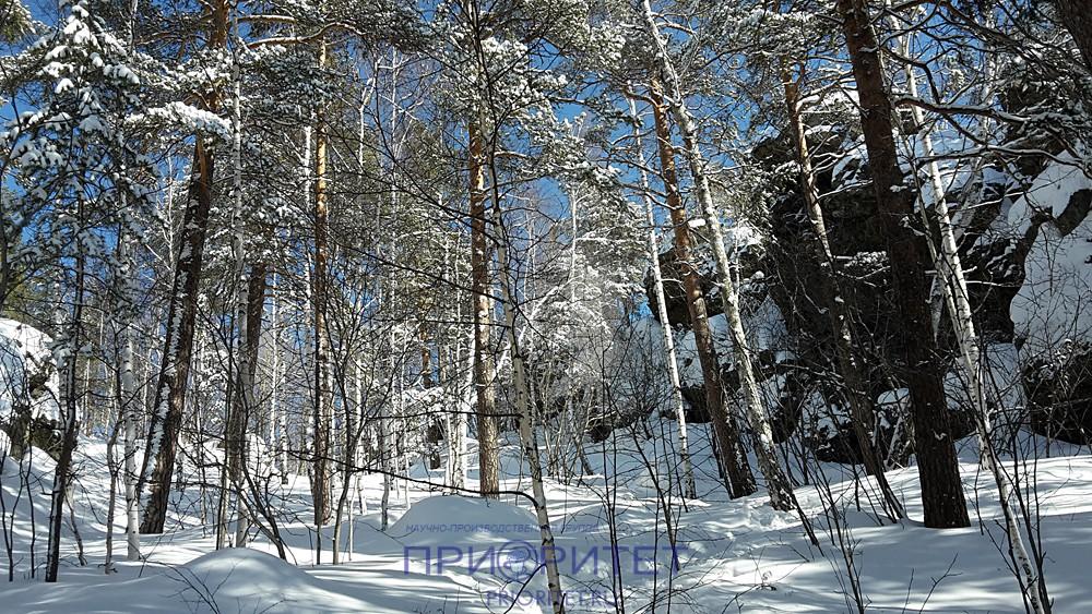 Лесные красоты